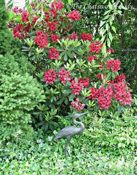 Denny (the) Crane with rhododendrons