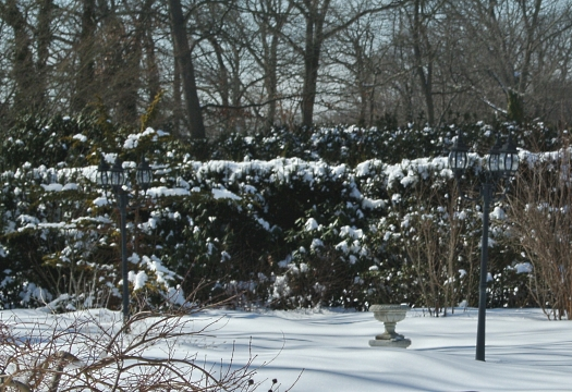 After the latest snowfall, and yes the planter does sit on a plinth (which I might see again in May?)