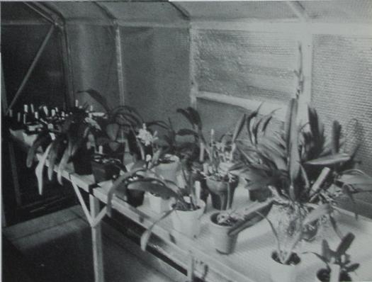 greenhouse 1983 b