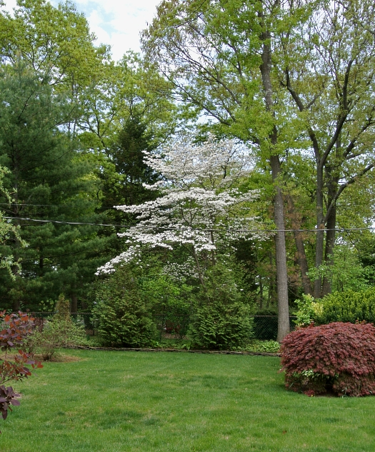 neighbors dogwood
