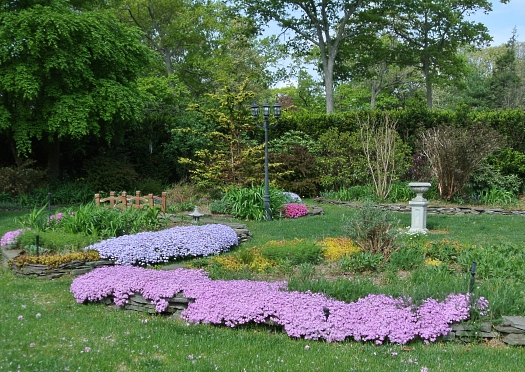 phlox in raised beds