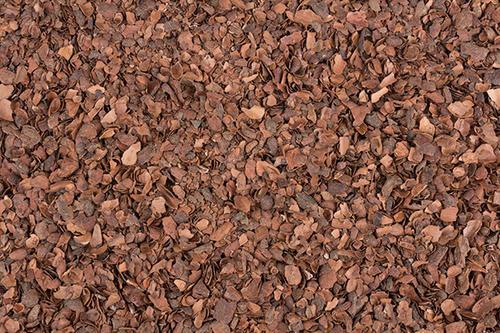 cocoa bean shell mulch