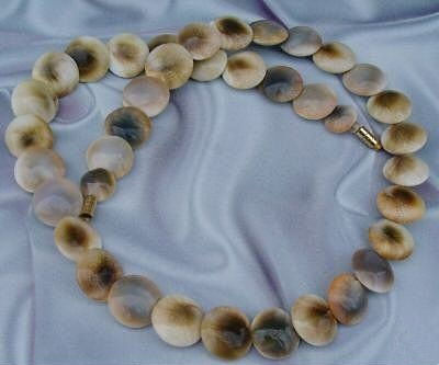 operculum disk necklace