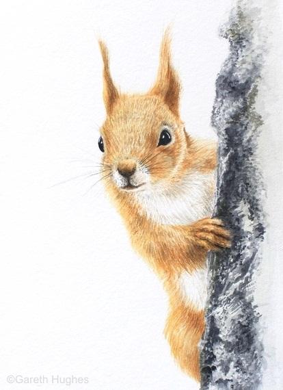 RED SQUIRREL PEEKING by Gareth Hughes
