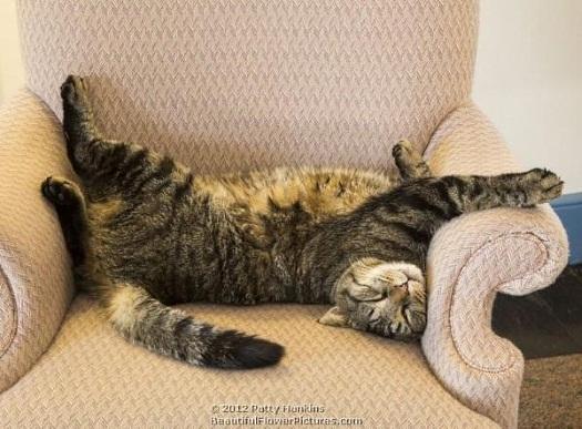 longwood-cat-belin-napping