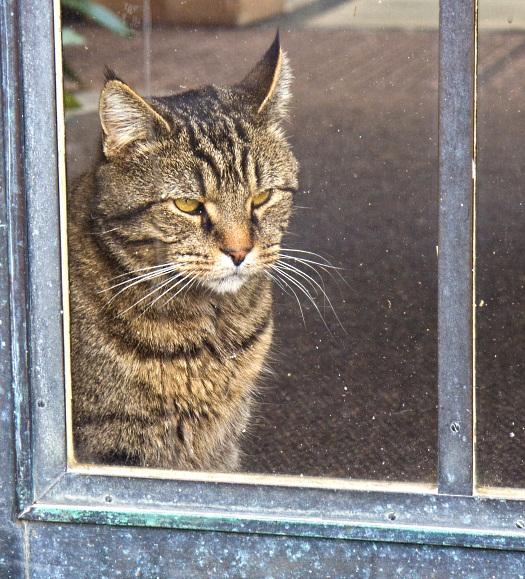 longwood-cat-belin