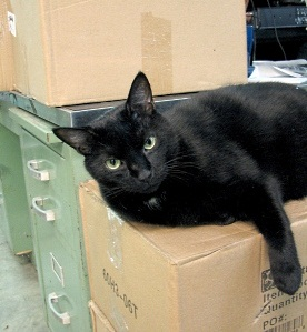 longwood-cat-boca-waiting-for-an-open-box