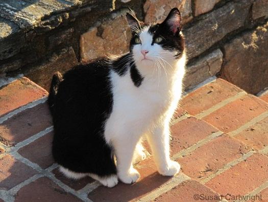 longwood-cat-iggy