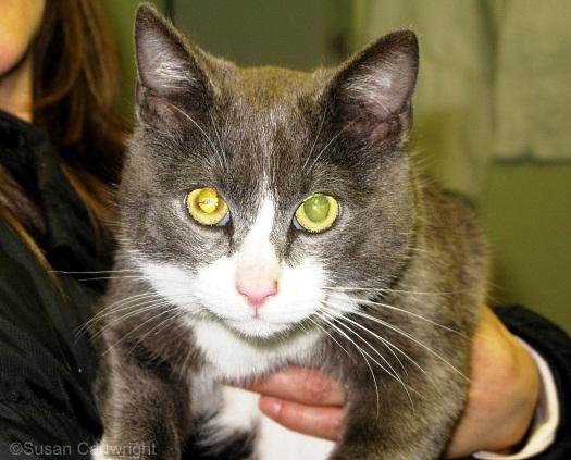 longwood-cat-jerry