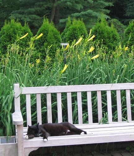 longwood-cat-jojo-on-bench
