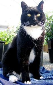 longwood-cat-jojo