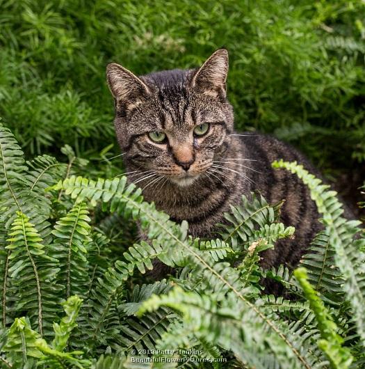 longwood-cat-mulligan