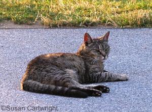 longwood-cat-noel