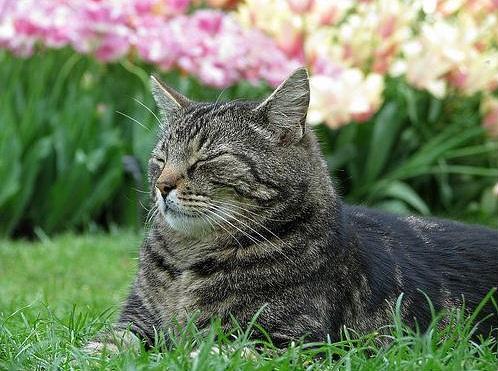 longwood-cat-paulie