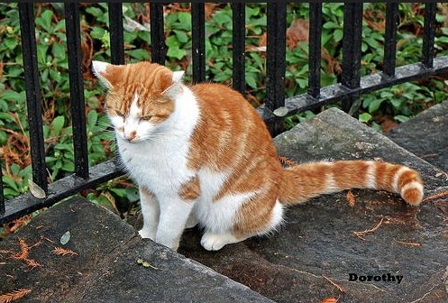 longwood-cat-persimmon