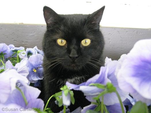 longwood-cat-smitty