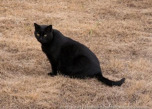 longwood-cat-spooky-in-winter