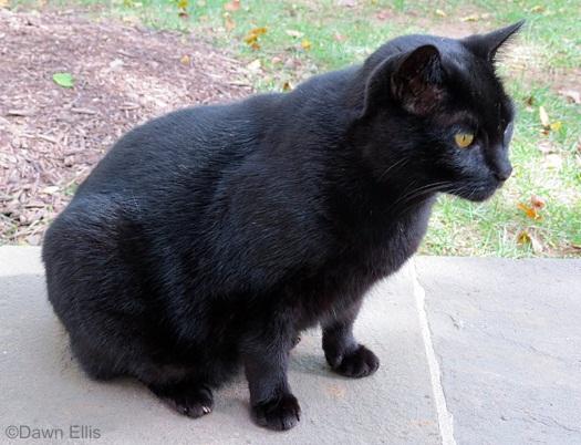 longwood-cat-spooky