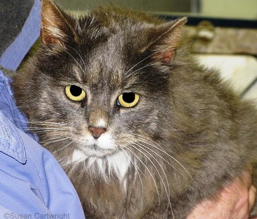 longwood-cat-vincenzo