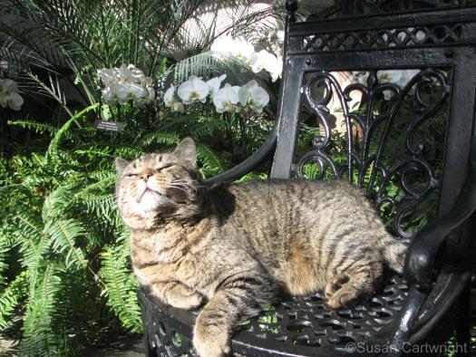 longwood-gardens-cat-in-greenhouse