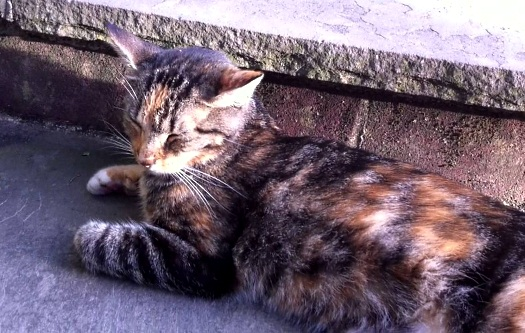 longwood-gardens-tortie-cat