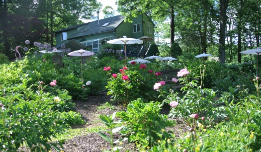 This Is One Of Three Planted Areas At Cricket Hill, And Is The One Closer  To The Small River That The Nursery Adjoins. The Other Peony Area Is Closer  To The ...