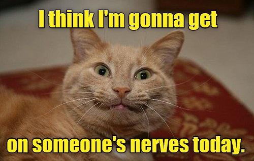 cat meme 73?w=529 favorite cat memes, part 5 the chatsworth lady